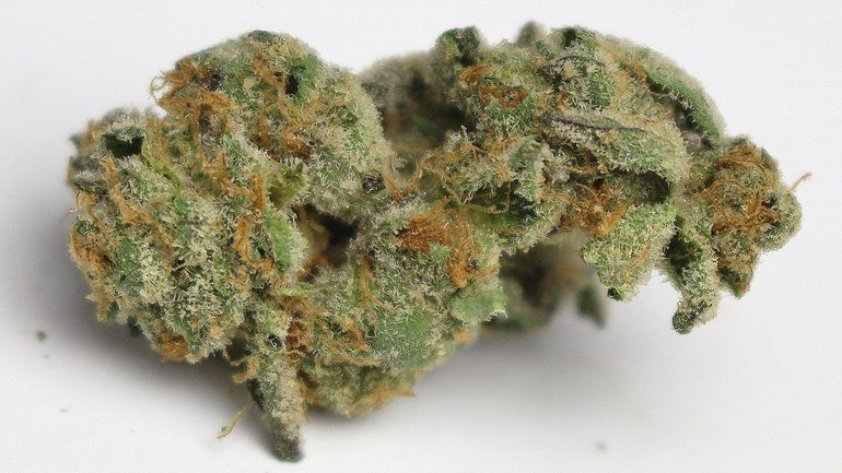 Animal Cookies(5for50)