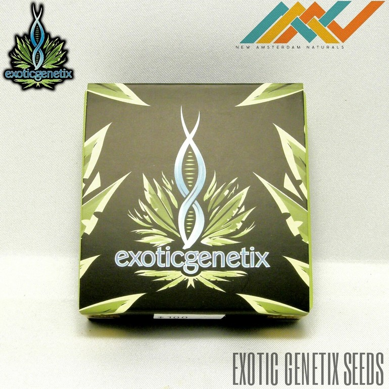 Exotic Genetics Seeds - Blackberry Cream
