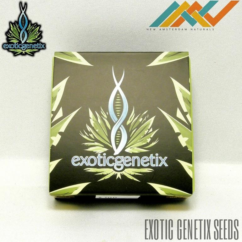 Exotic Genetics Seeds - Pink