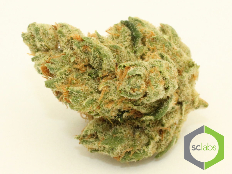 Platinum: Candy Land (king Cookie)