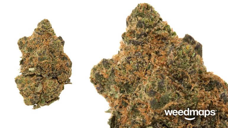 Platinum: Mimosa Cookies (king Cookie)