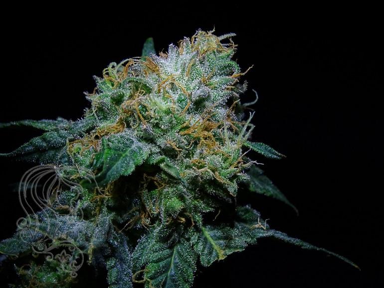 Thc Flower - Grape Ape