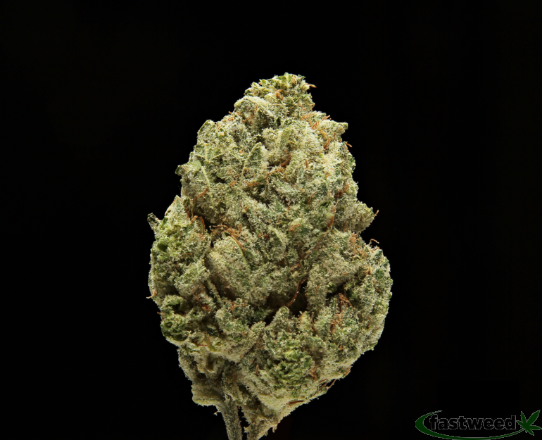 Mega Wellness Og(cannabis Cup Winner)