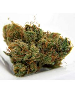 ♕top Shelf♕ Dutch Treat