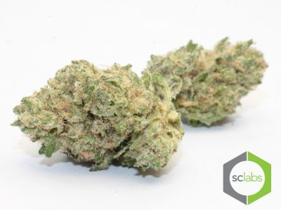 ♕top Shelf♕ Neptune Og